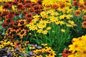 5 Tips to Light Up Your Landscaping This Fall