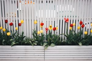 How to Make the most of Your Small Garden