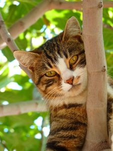Cat-Friendly Landscaping Tips