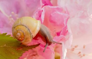 Keeping Slugs and Snails Out of Your Garden
