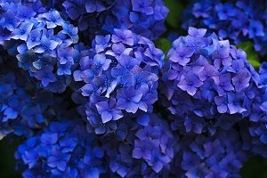 What's the Difference Between Perennial and Annual Flowers?