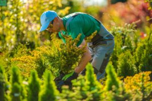 Residential Landscape Contractor