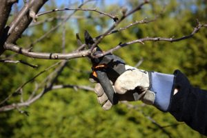 Why Only Professionals Should Be Pruning Your Trees and Shrubs